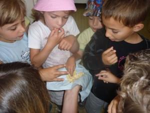 Les enfants goûtent la pâte à tarte