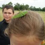 grosse sauterelle